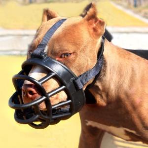 Muzzle for Pitbulls